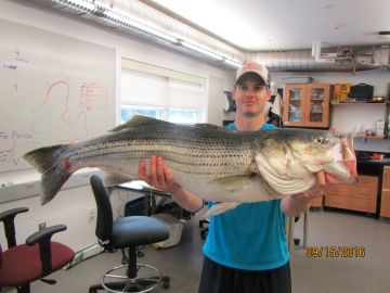 striped-bass-44inches-31-lbs-9-16-16